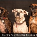 Image of Three Dogs